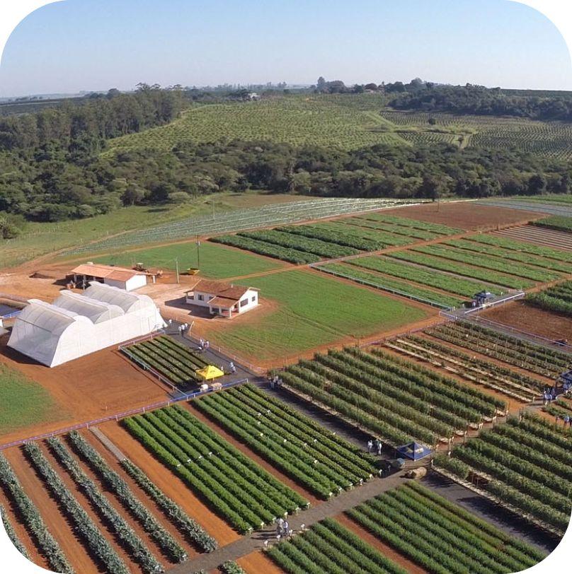 <p>A Estação Experimental de SP passa a funcionar em uma       nova área, proxima a matriz em Santo Antônio de Posse (SP).</p>