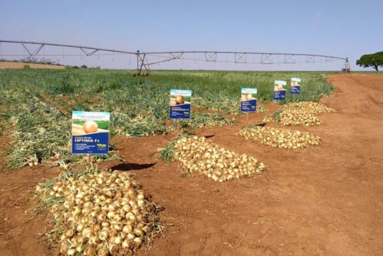 Topseed Premium promove Dia de Campo sobre cebolas em Monte Alto (SP)