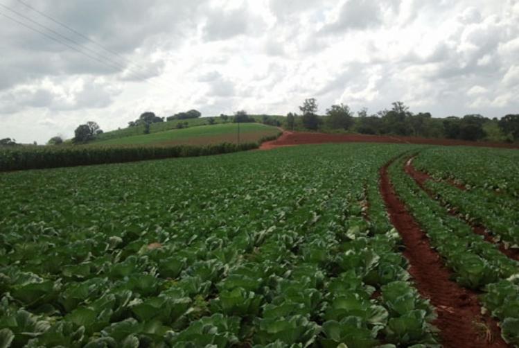 Culturas do Cintur�o Verde s�o boas oportunidades para a agricultura familiar