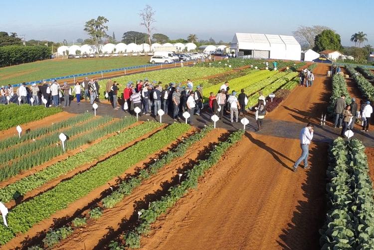 Dia de Campo da Agristar atrai mais de 3 mil participantes durante a Hortitec