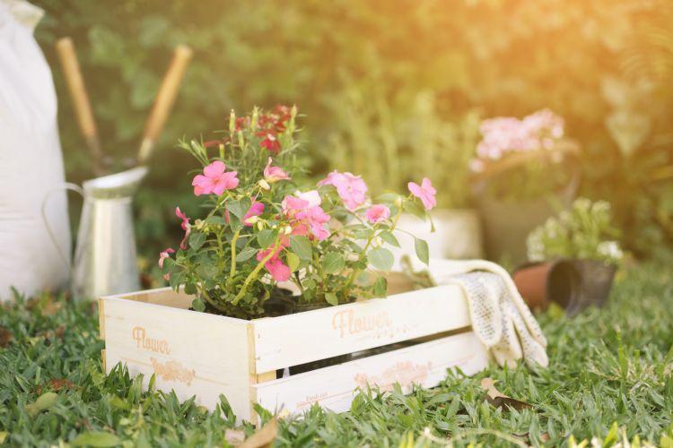 Dicas para ter um jardim ainda mais florido