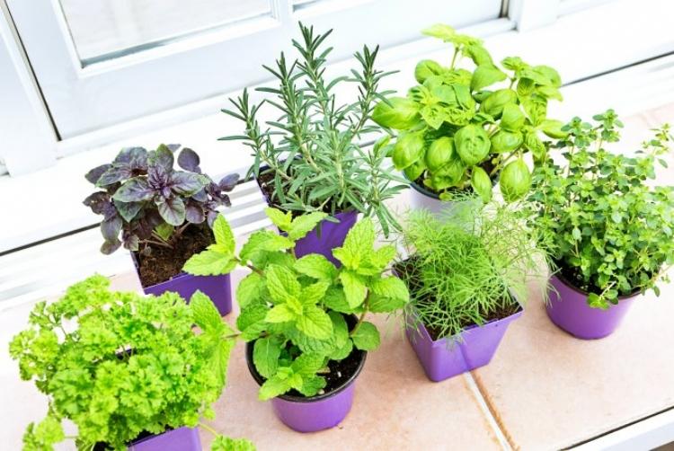 Horta em casa: tudo o que você precisa saber para cultivar seus temperos