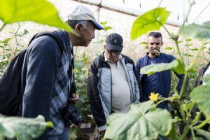 Linha Topseed Premium apresenta novas variedades no Open Field Day 2019