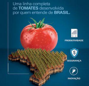Tomates salada: conheça a linha completa da Topseed Premium