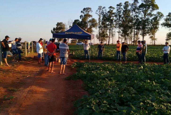 Dia de Campo sobre o pepino Concord F1 é realizado em Sabino (SP)