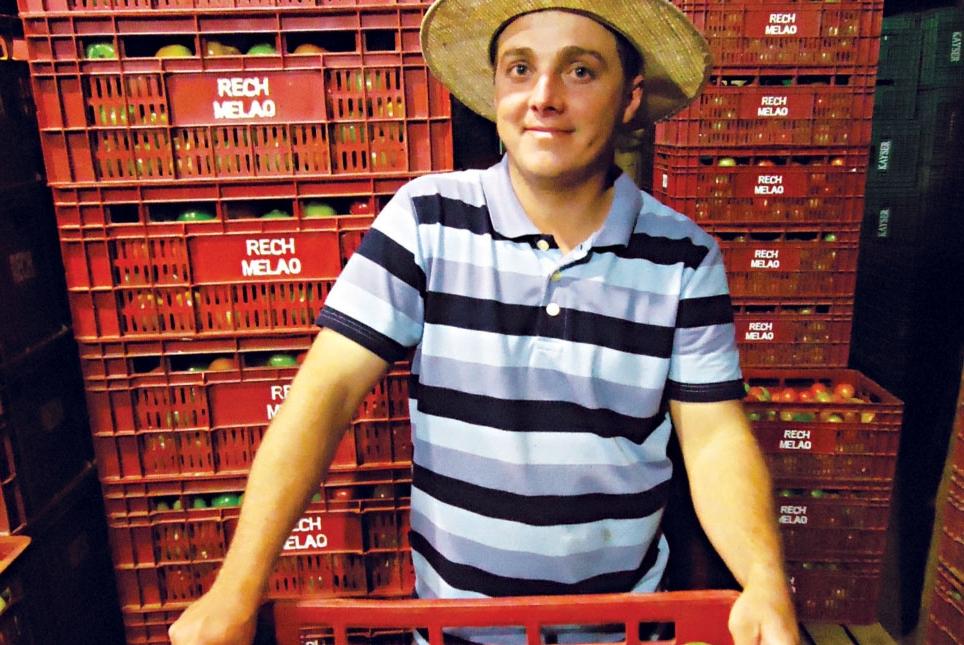 Lançamento 2015: Tomate Itaipava já mostra resultados positivos em lavoura de Viamão (RS)