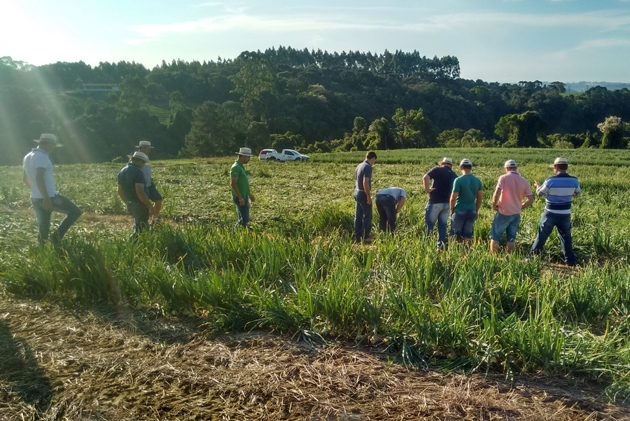 Tour Técnico nas lavouras de cebolas  híbridas