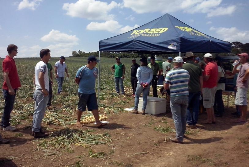 Dia de campo sobre cebola soberana em Irati (PR)