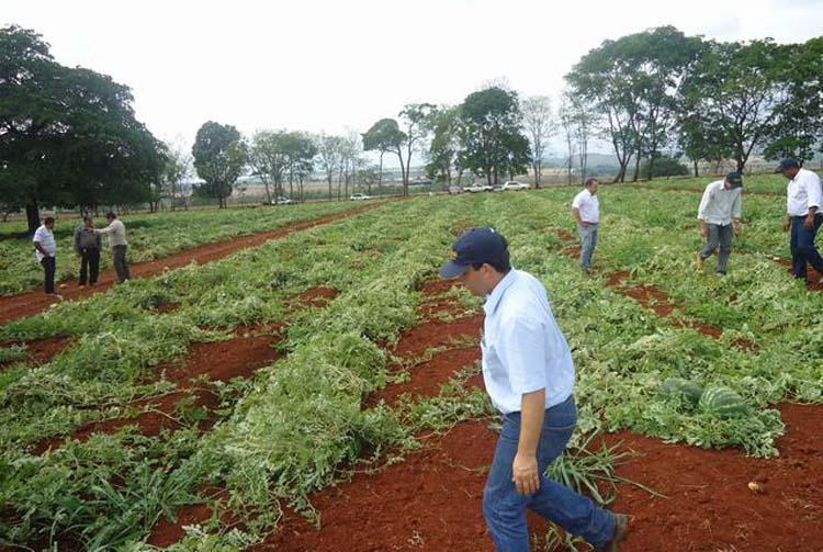 Dia de campo da melancia híbrida Explorer em Uruana (GO)