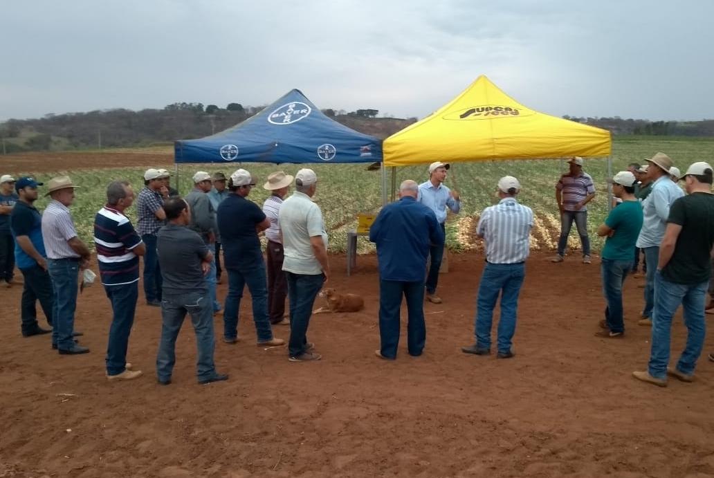 Superseed apresenta cebola Montesina F1 em campo de Monte Alto (SP)