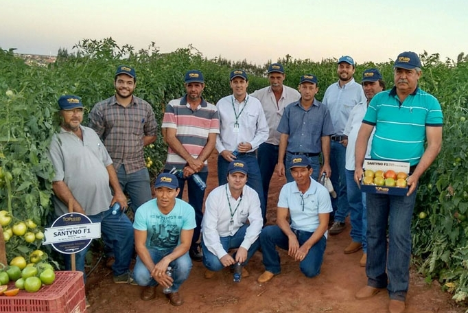 Dia de Campo tomate Santyno F1 em Oríndiuva (SP)