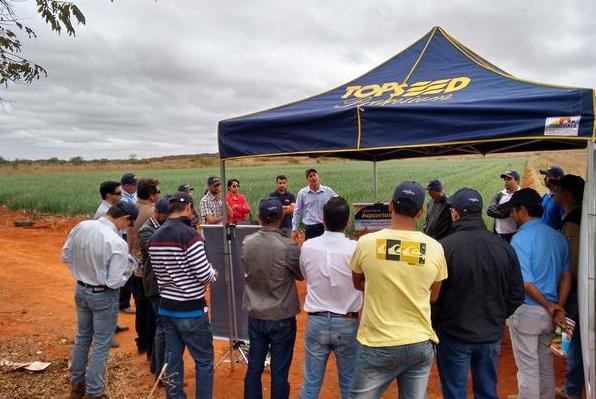Topseed Premium mostra resultados da cebola Andrômeda em Lapão (BA)