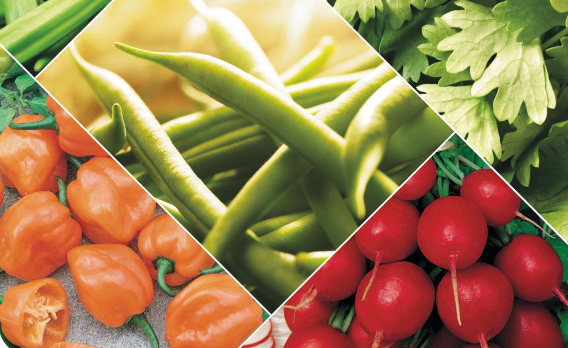 Agristar amplia foco em produtos de cinturão verde