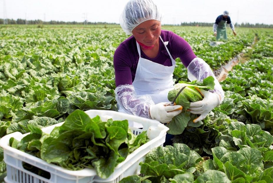 Ceagesp lança manual sobre o manuseio de produtos hortícolas