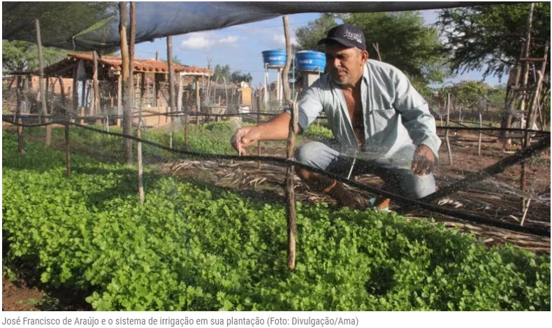 Com irrigação artesanal e de baixo custo, Semiárido tem novos produtores