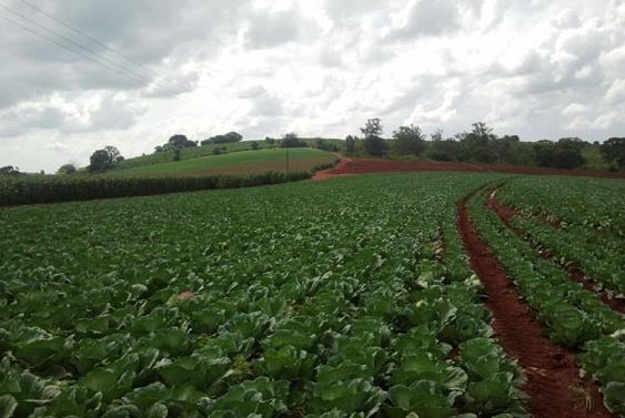 Culturas do Cinturão Verde são boas oportunidades para a agricultura familiar