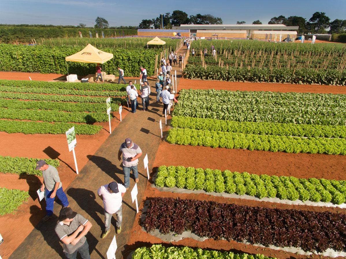 Dia de Campo da Agristar tem números recordes durante a Hortitec
