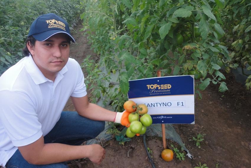 El representante en  Bolivia realizo un  Día de Campo sobre el tomate Santyno F1