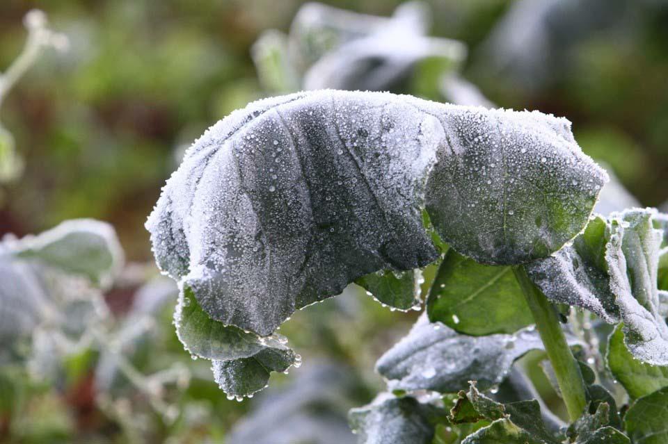 Fenômeno La Niña vai influenciar o inverno de 2016