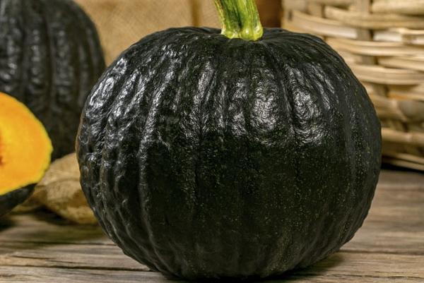 Frutos graúdos, com polpa espessa e maior peso destacam a abóbora Furusato no mercado