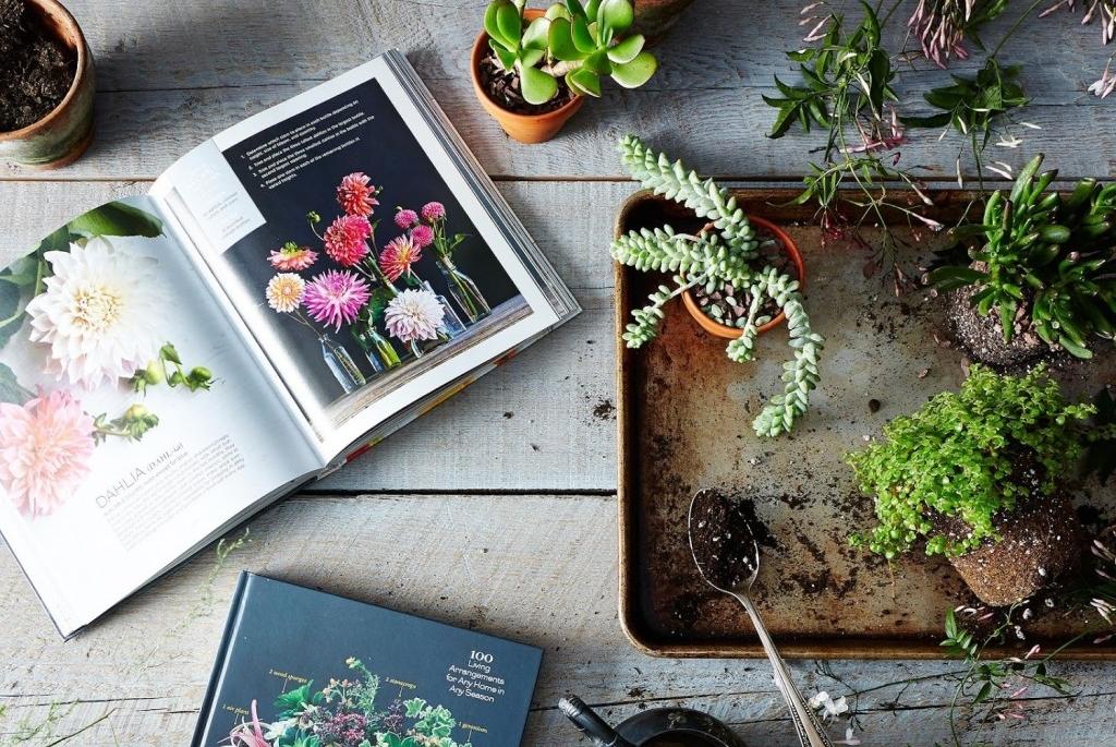 Ideias para começar a praticar Jardinagem