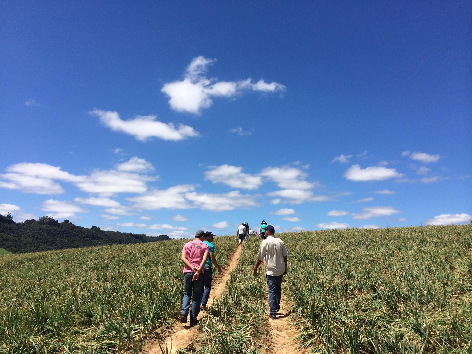 Ituporanga recebe 2º Tour de Cebolas Híbridas