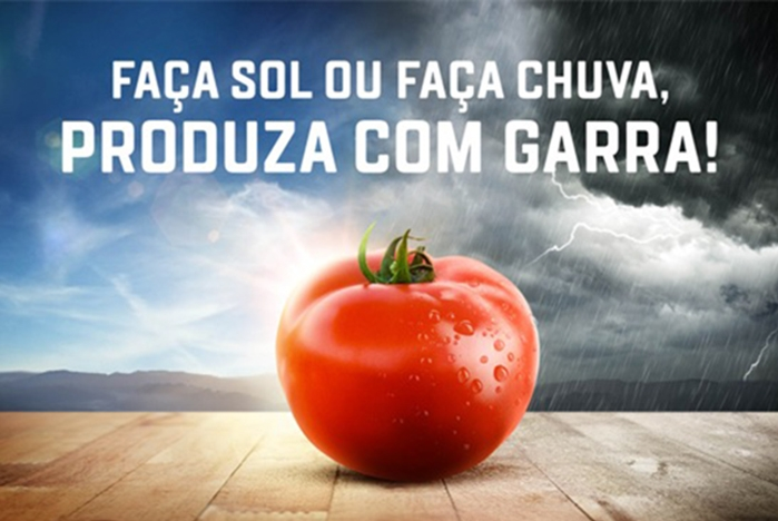 Lançamento: Tomate Garra é a solução para plantio em condições adversas