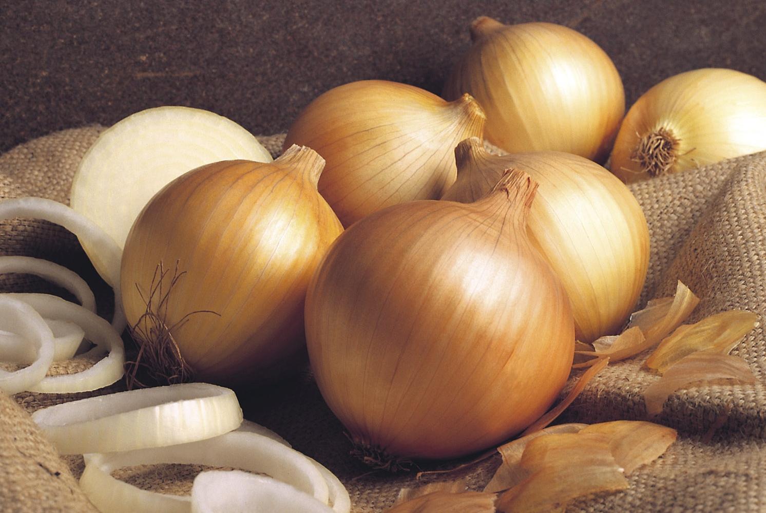 Linha de cebolas híbridas garante produtividade e qualidade aos produtores durante o ano todo