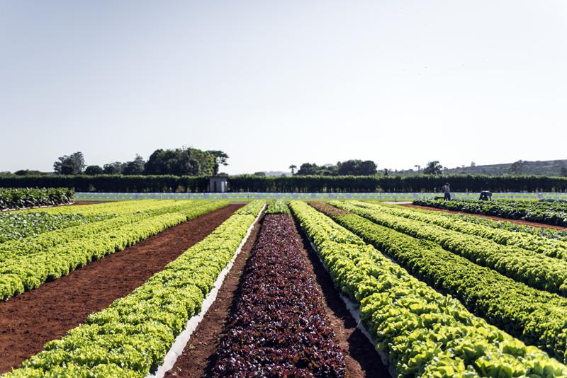 Manejo inteligente: o segredo para um solo produtivo e sustentável