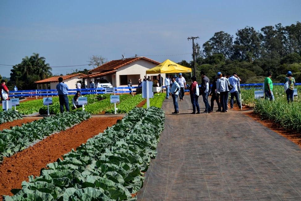 Mesmo após instabilidade no clima, variedades se destacam durante o Open Field Day