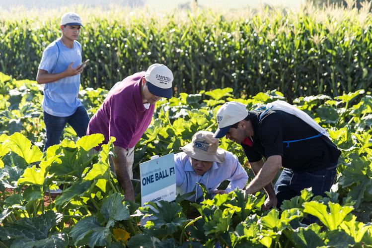 Pequenos produtores rurais terão R$ 1 bilhão para assistência técnica