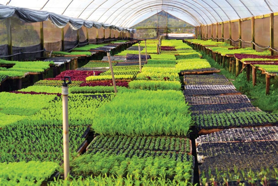 Produção de mini legumes abre novo nicho de mercado para produtores