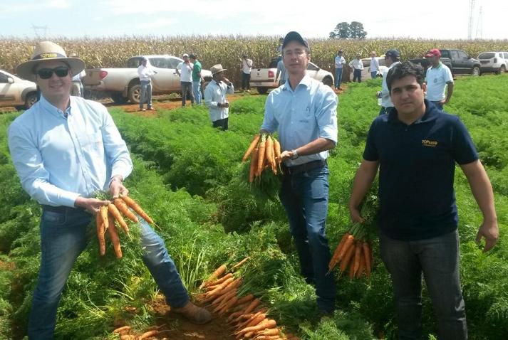 Topseed Premium apresenta novas variedades de cenouras híbridas de verão em Minas Gerais