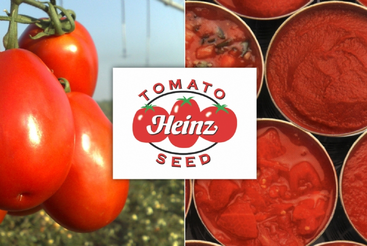 Parceria Agristar e Heinz Seed