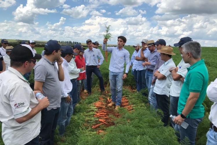Tour em São Gotardo-MG mostra em campo as cenouras de verão AGR123 e AGR125