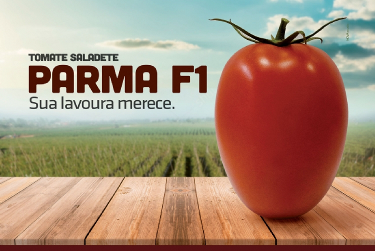 VÍDEO - Tomate Saladete Parma F1
