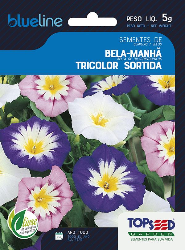 BELA-MANHÃ TRICOLOR SORTIDA