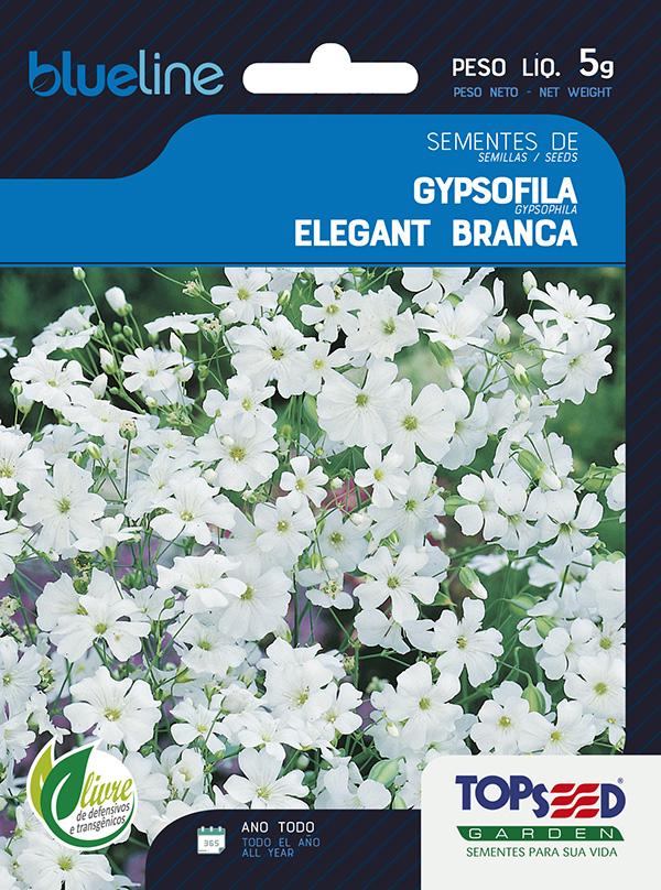 GYPSOFILA ELEGANT BRANCA