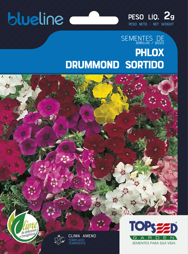 PHLOX DRUMMOND SORTIDO