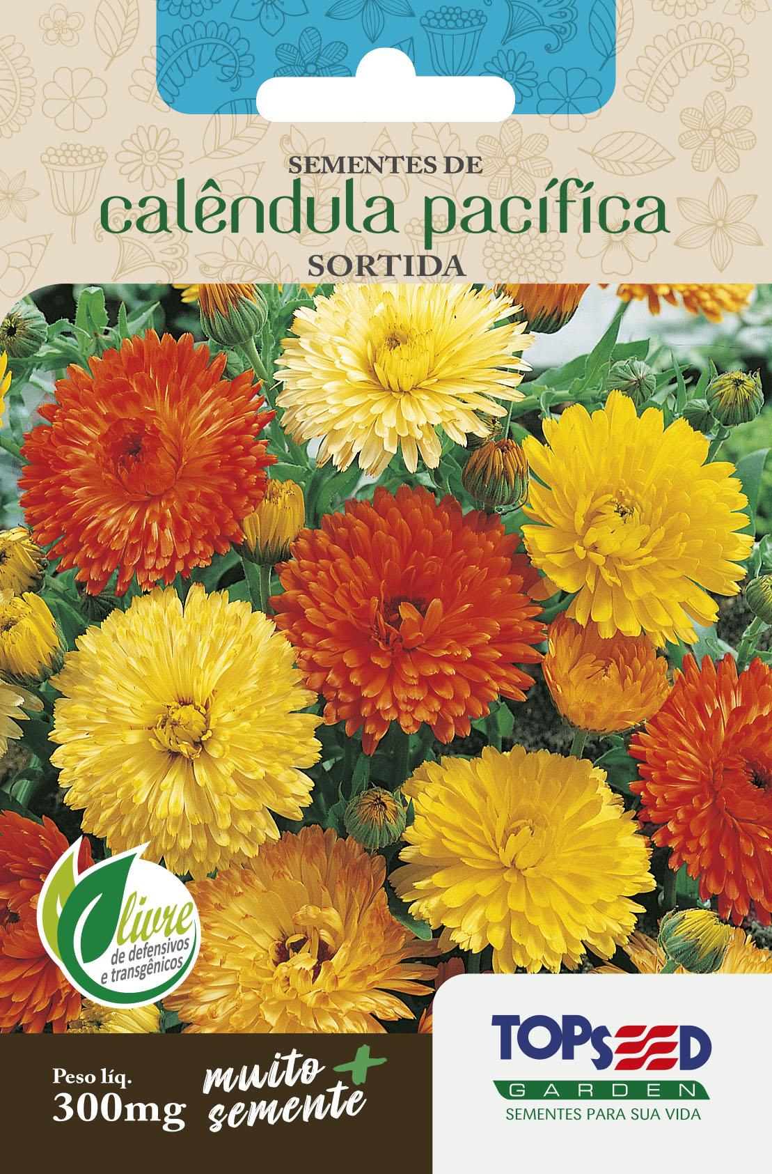 girassol anao de jardim:TRADICIONAL FLORES SEMENTE CALÊNDULA PACÍFICA SORTIDA