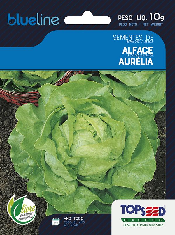ALFACE AURÉLIA (MANTEIGA)