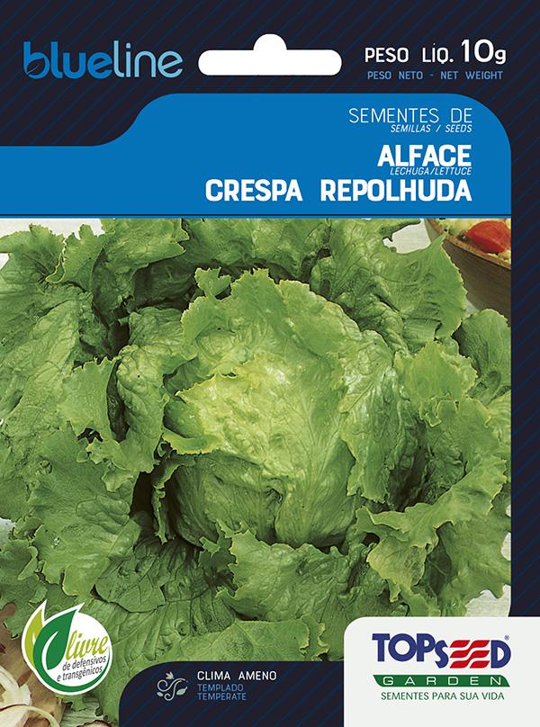 ALFACE CRESPA REPOLHUDA