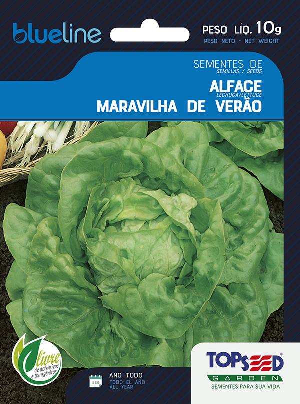 ALFACE MARAVILHA DE VERÃO(MANTEIGA)