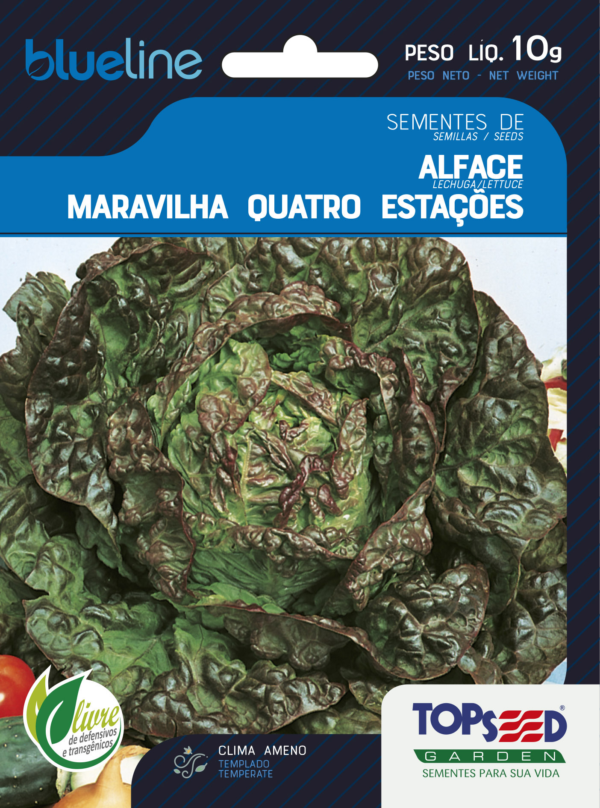 ALFACE MARAVILHA QUATRO ESTAÇÕES