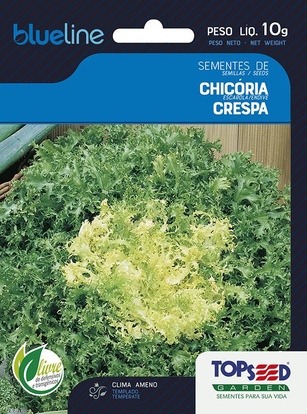 CHICÓRIA CRESPA
