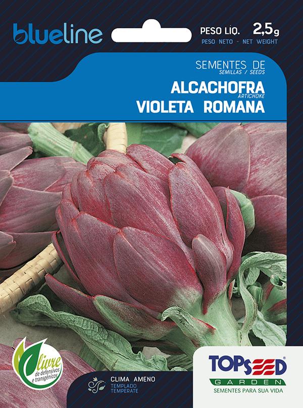 ALCACHOFRA VIOLETA ROMANA