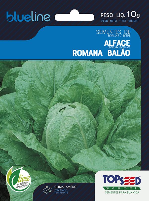ALFACE ROMANA BALÃO