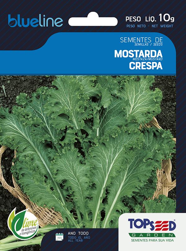 MOSTARDA CRESPA