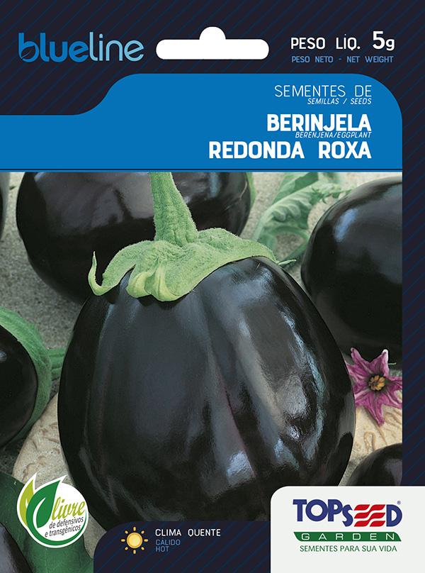 BERINJELA REDONDA ROXA