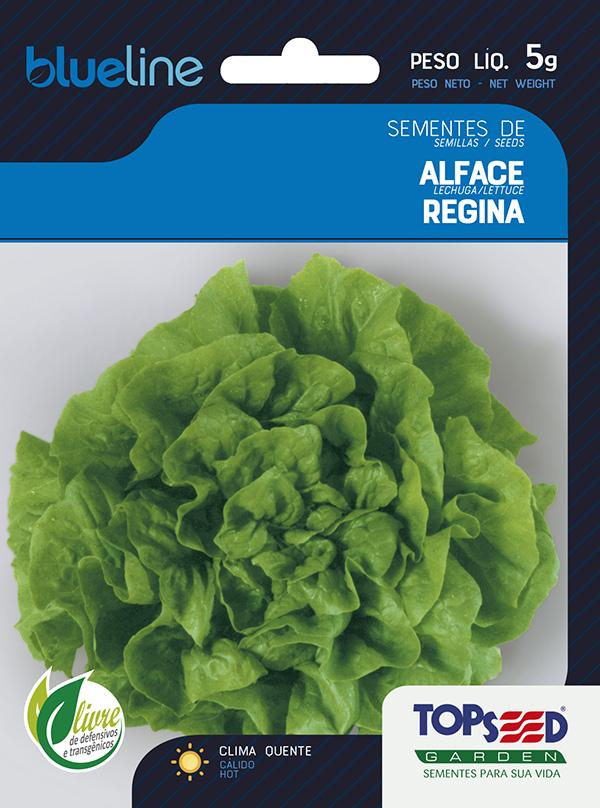 ALFACE REGINA